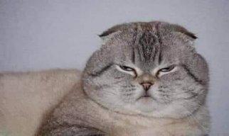 Mèo Mập Lười
