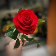 Back rose 17062003