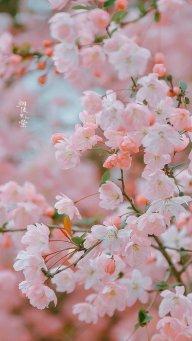 Thiên Hoa Ngọc Tâm